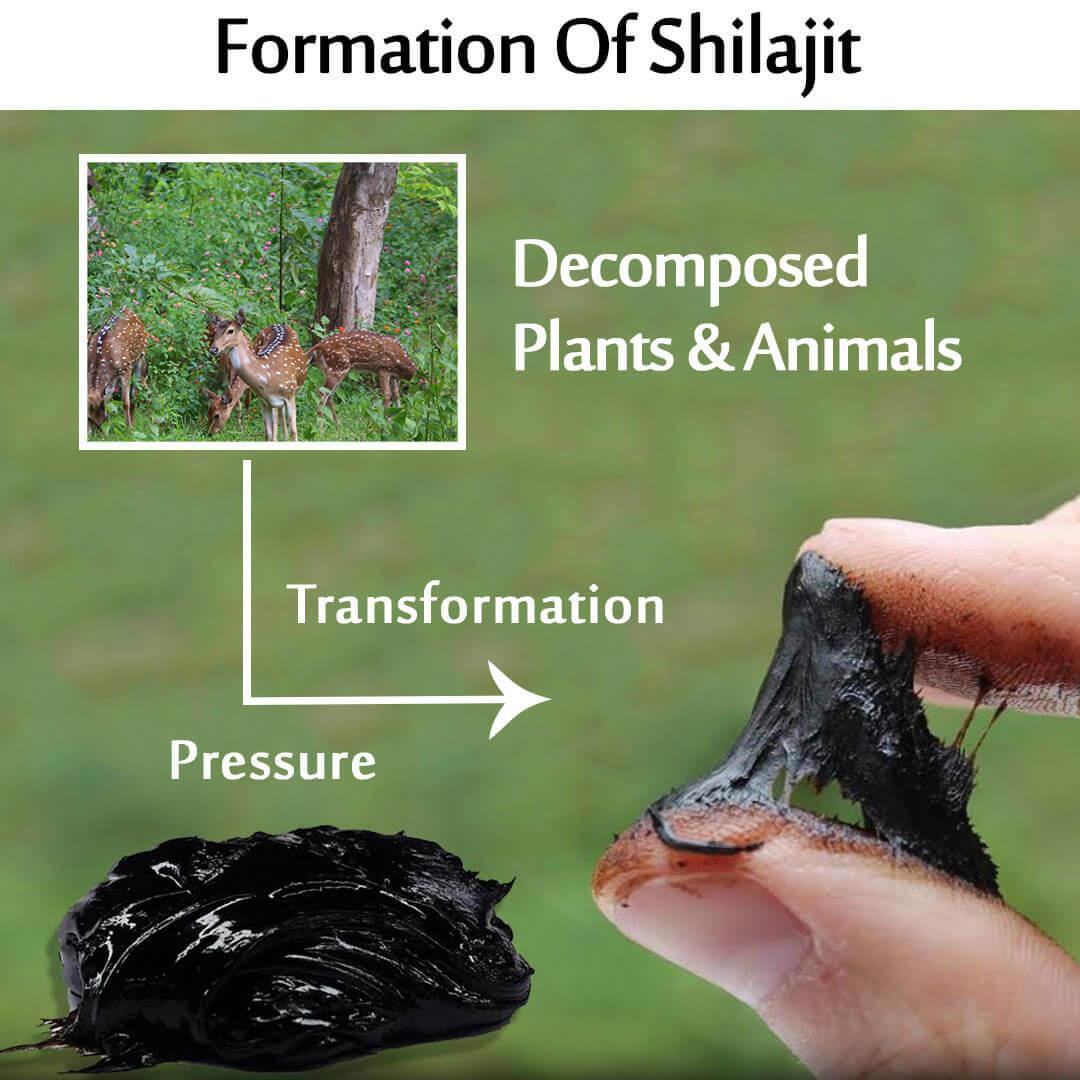 Formation of Shilajit