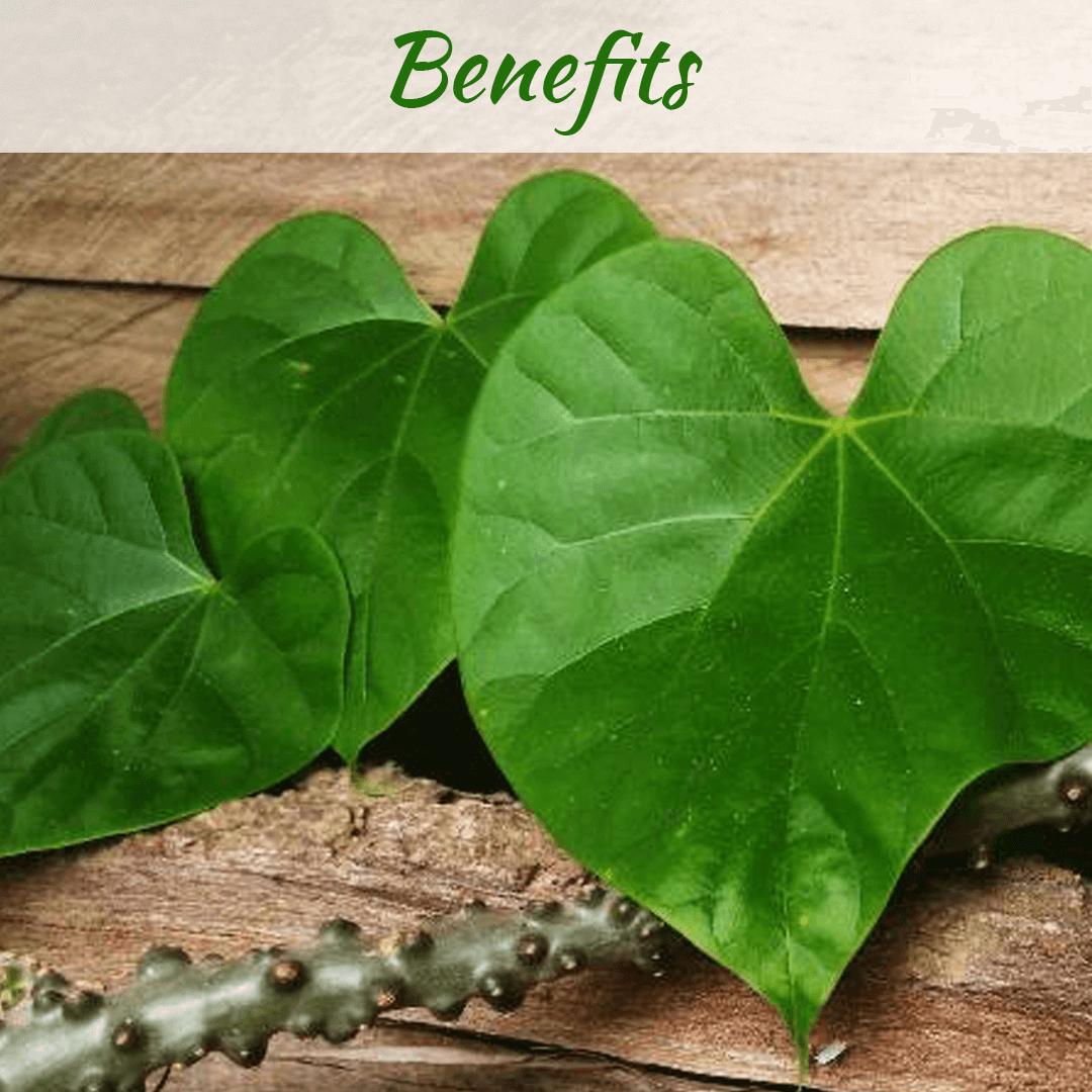 Benefits of Giloy